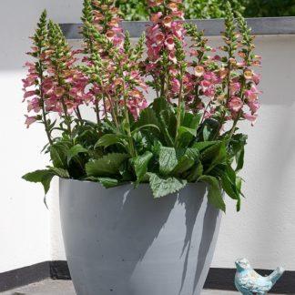 Květináč BETON PLANTER 53cm Stewart