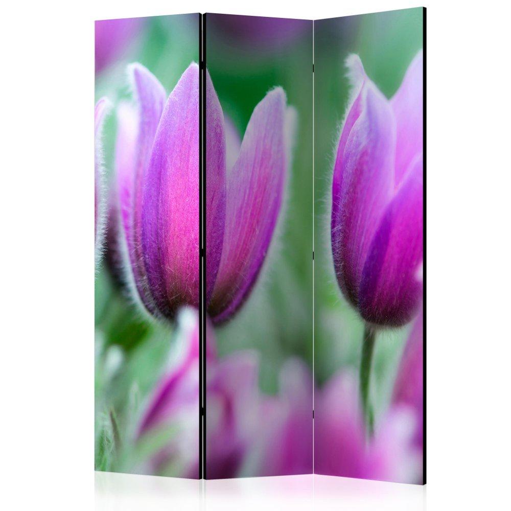 Paraván Purple spring tulips Dekorhome 135x172 cm (3-dílný)