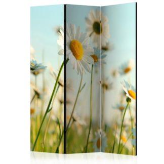 Paraván Daisies - spring meadow Dekorhome 135x172 cm (3-dílný)